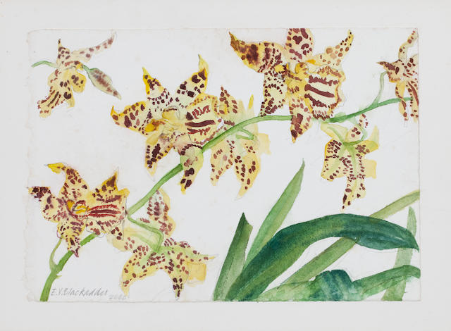 Dame Elizabeth Blackadder OBE RA RSA RSW RGI DLitt (British, born 1931) Study of Yellow Orchids 15 x 22 cm. (5 7/8 x 8 11/16 in.)