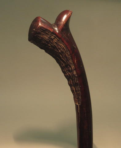A spurred fighting club, Gatawaka, Fiji 102cm long