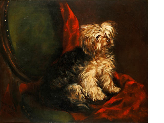 English School, 19th Century A Yorkshire terrier