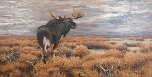 Wilhelm Friedrich Kuhnert (German, 1865-1926) Moose in the Swedish Highlands  141 x 285 cm. (55 1/2 x 112 3/16 in.)