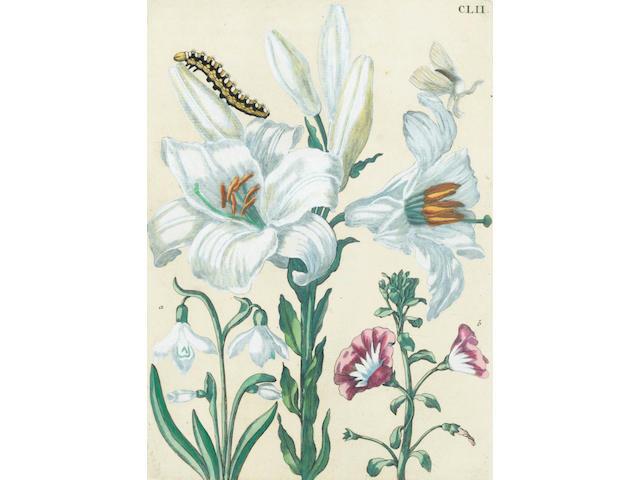 MERIAN (MARIA) De Europische Insecten, FIRST FOLIO EDITION, Amsterdam, J. F. Bernard, 1730