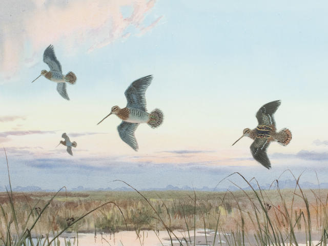 John Cyril Harrison (British, 1898-1985) Snipe on a Norfolk Marsh