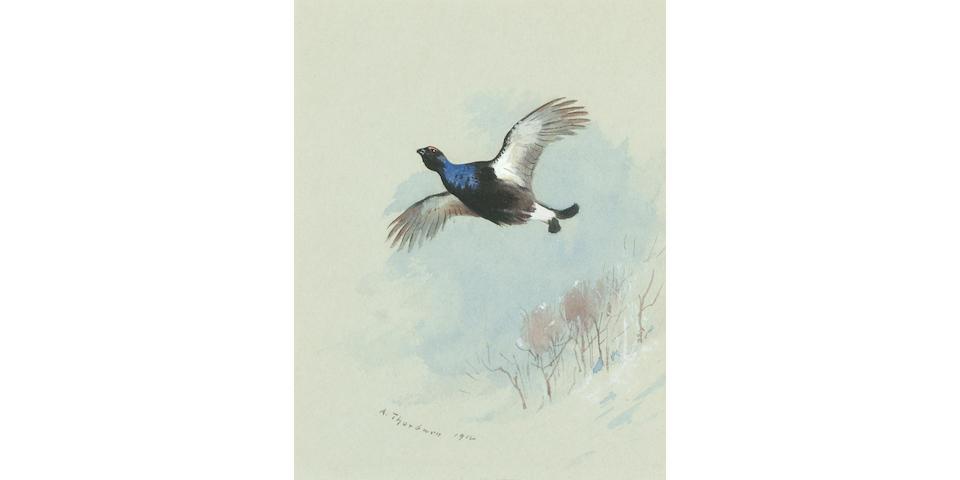 Archibald Thorburn (British, 1860-1935) Blackcock in flight