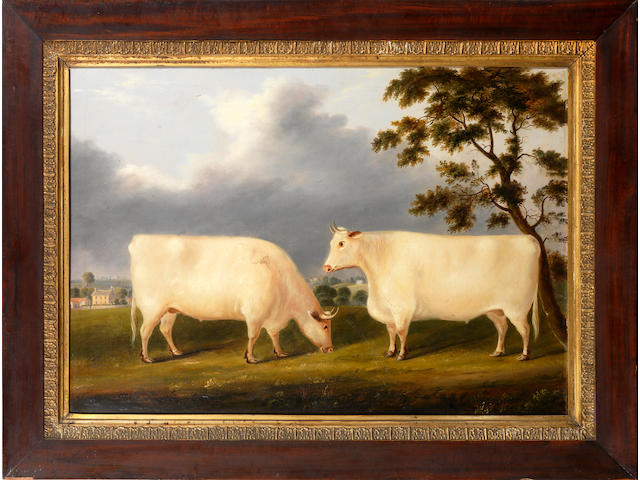 English Naïve School, 19th Century Two white Shorthorn heiffers in a landscape
