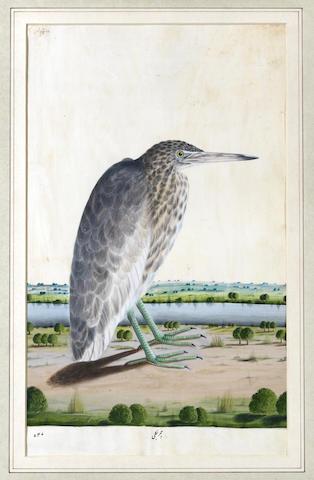 A Bittern (bottaurus stellaris) standing on a river bank Lucknow, circa 1775-85(2)