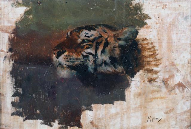 Vincenzo Migliaro (Italian, 1858-1938) Pacha: study of a Tiger