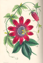 PAXTON (JOSEPH)  Magazine of Botany, and Register of Flowering Plants, vol. 1-15 (of 16), Orr & Smith, 1834-1848, sold as a periodical not subject to return