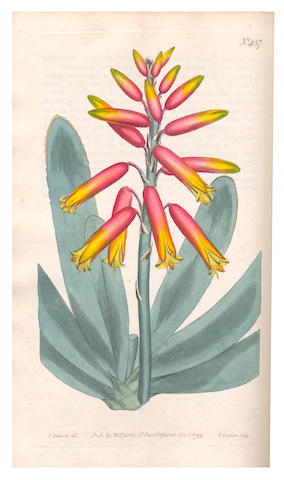 CURTIS (WILLIAM) The Botanical Magazine; or, Flower-garden Displayed, vol. 1-13, 1793-1799; idem, another run, vol. 13-14, and 17-26 bound in 6, 533 hand-coloured engraved plates (as called for, including 923*, a few folding), one uncoloured plate, contemporary half calf, gilt morocco lettering labels (3 missing), worn, one cover detached [Nissen BBI 2350], 1799-1808, 8vo, William Curtis, sold as a periodical not subject to return (19)