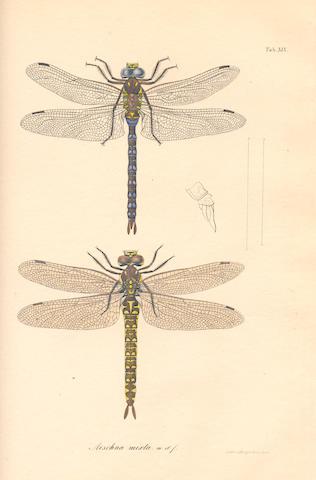 CHARPENTIER (TOUSSAINT DE) Libellulinae europaeae descriptae ac depictae, FIRST EDITION, Leipzig, Leopold Voss, 1840