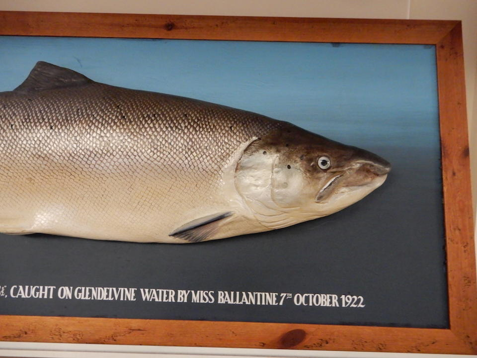 The British Record Salmon, Caught by Miss Ballantine on 7th October 1922 (4)