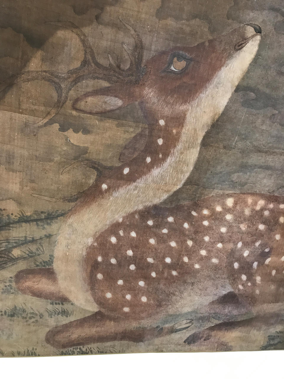 Anonymous Speckled Deer