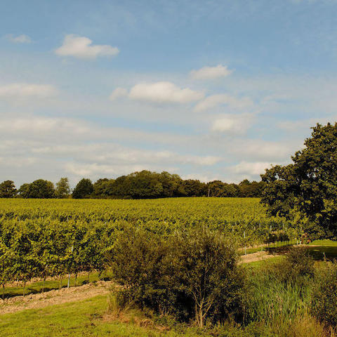 The wine garden of England, A three day, two-night visit to Kent for four people to visit the rising stars of the booming English wine industry