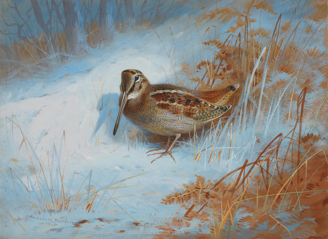 Archibald Thorburn (British, 1860-1935) A woodcock in the snow