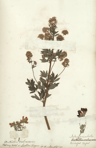 NORFOLK An eighteenth century English Hortus Siccus, [May-July 1793]