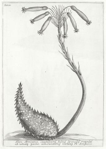 TILLI (MICHELANGO) Catalogus plantarum horti Pisani, FIRST EDITION, Florence, 1723