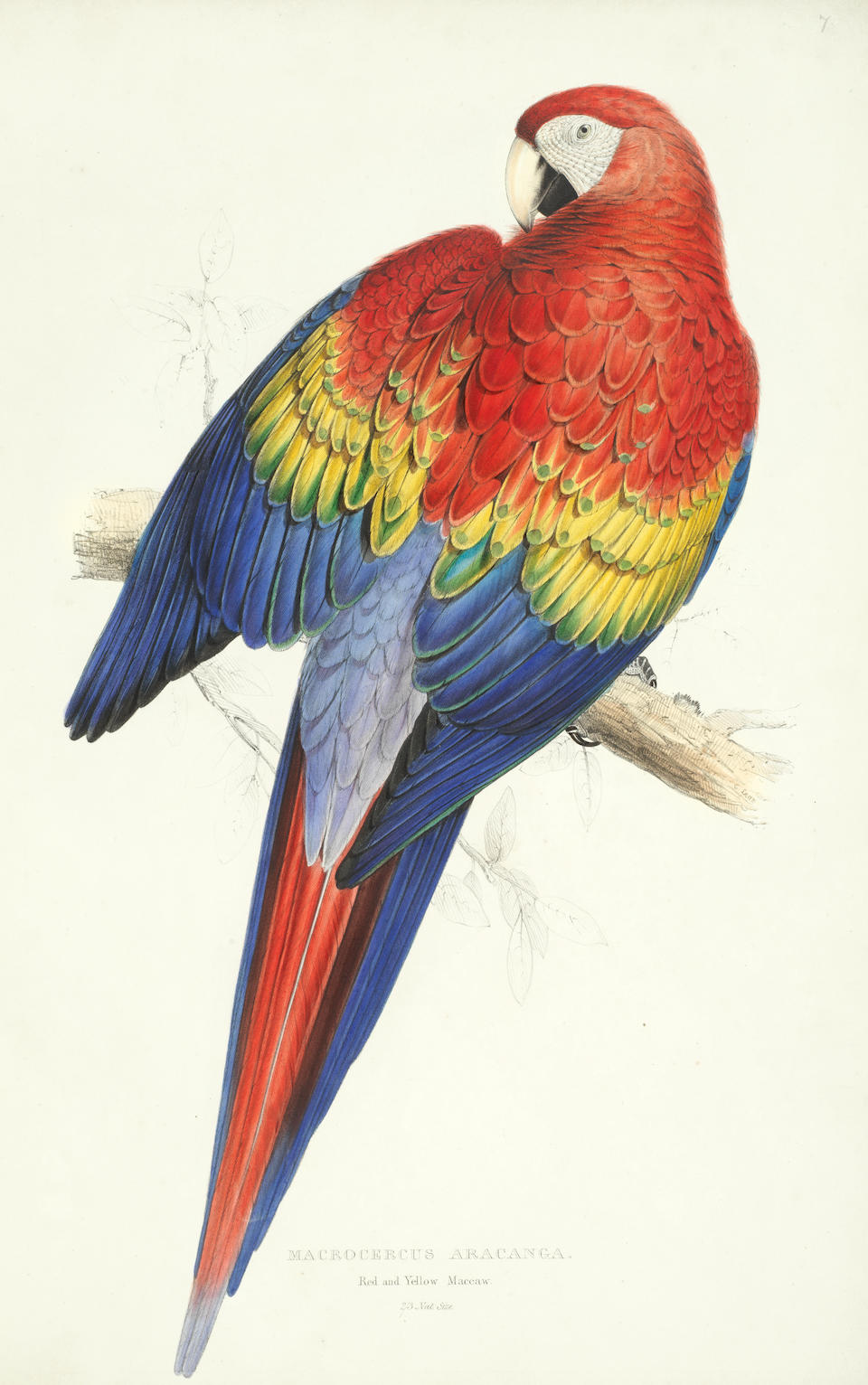 LEAR (EDWARD) Illustrations of the Family of Psittacidae, or Parrots: the greater part of them species hitherto unfigured... drawn from life, and on stone, FIRST EDITION, E. Lear, [1830]-1832