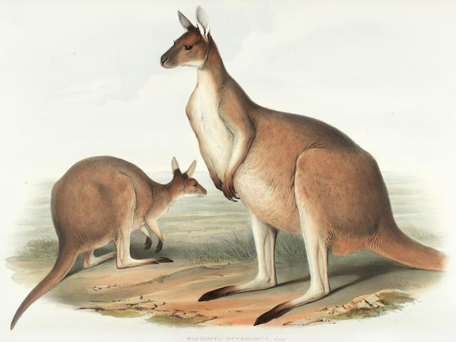 GOULD (JOHN) The Mammals of Australia, 3 vol., FIRST EDITION, Taylor and Francis [for] the Author, [1845]-1863