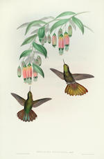 GOULD (JOHN) A Monograph of the Trochilidae, or Family of Humming-Birds, 5 vol., FIRST EDITION, by the Author, [1849]-1861