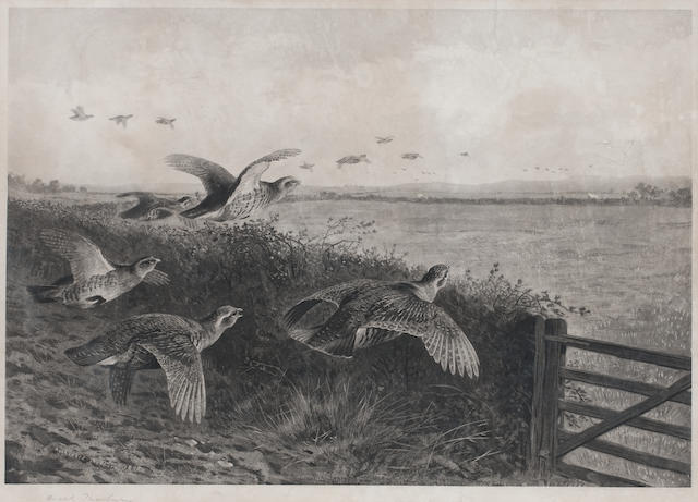 After Archibald Thorburn (British, 1860-1935) Going Downwind - Partridge Driving