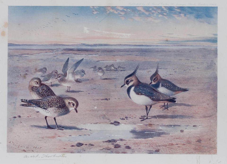 After Archibald Thorburn (British, 1860-1935) A group of five prints of British birds each: 19 x 28cm (7 1/2 x 11in). ((5))