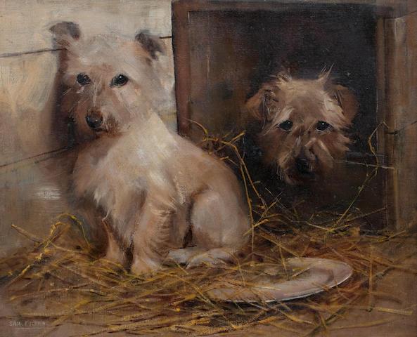 Samuel Fulton (British, 1855-1941) Terriers in a barn