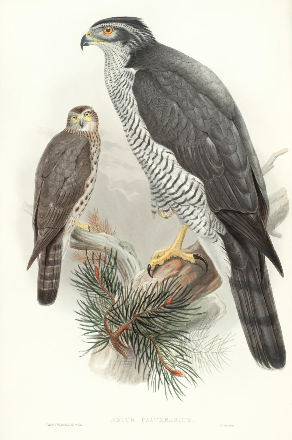 GOULD (JOHN) The Birds of Great Britain, 5 vol., FIRST EDITION, Taylor and Francis [for] the Author, [1862]-1873