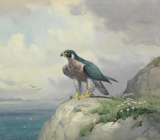 John Cyril Harrison (British, 1898-1985) Peregrine Falcon