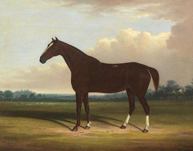 William Garland (British, active 1848-1882) A bay horse 61 x 77 cm. (24 x 30 5/16 in.)
