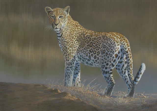 Paul B. Dixon (British) Leopard