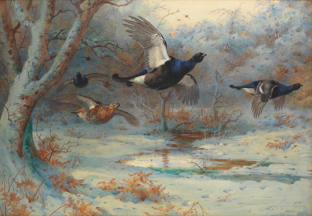 Archibald Thorburn (British, 1860-1935) Blackgame in woodland, winter