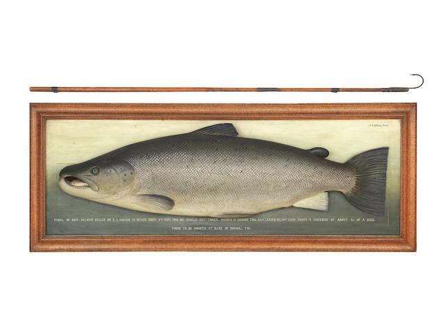 A carved salmon from the River Eden caught by Edwin Hough, A. P. D. Malloch, Perth