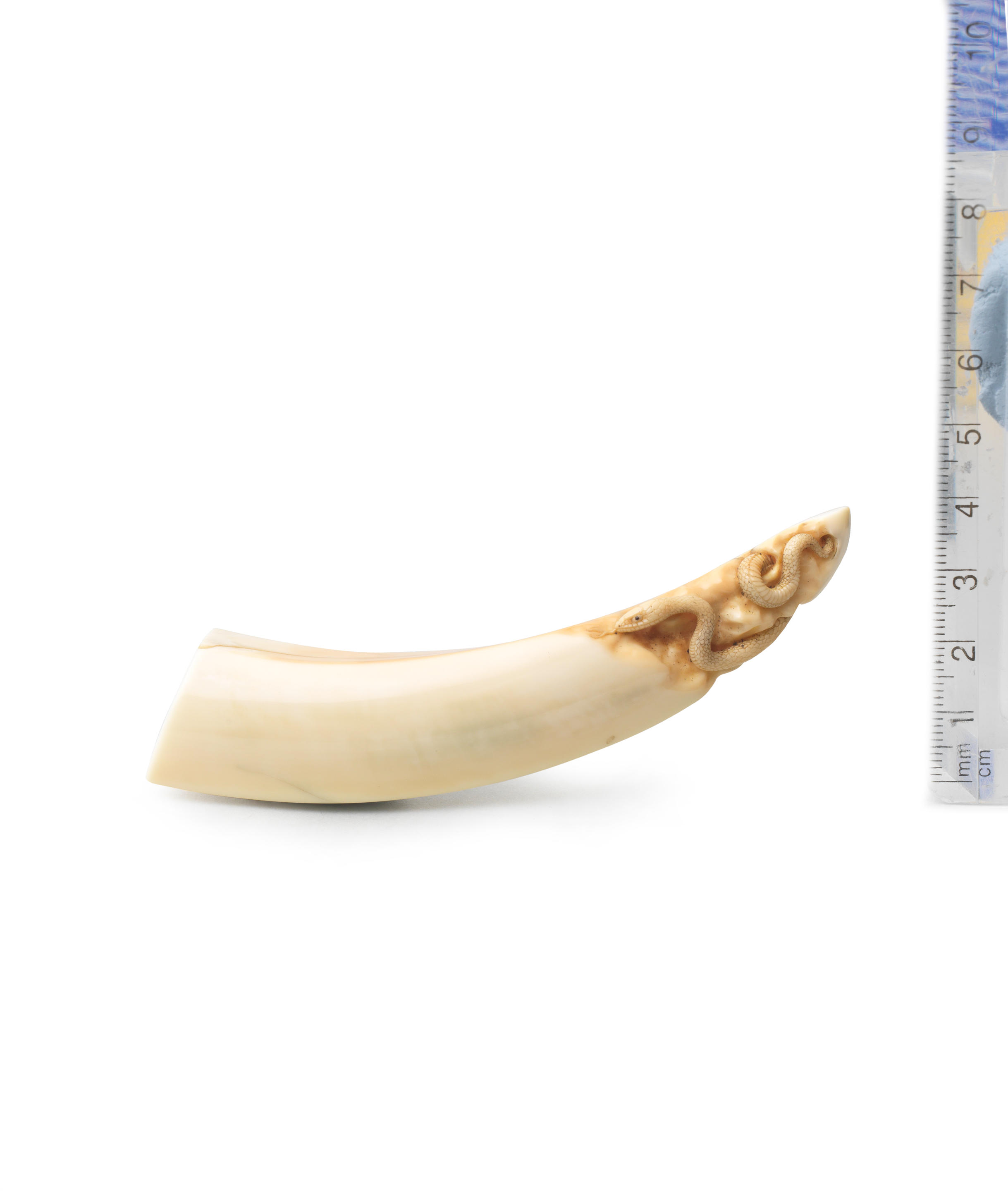 A boar-tusk netsuke with a snake