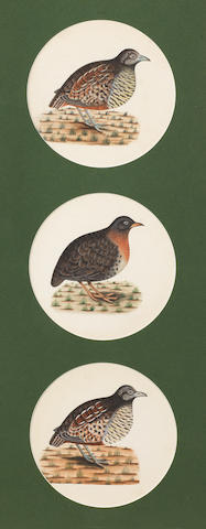 Three studies of birds, perhaps quail, from the collection of Major James Nathaniel Rind Company School, Lucknow, circa 1800