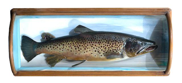 A Malloch cased Ferox brown trout