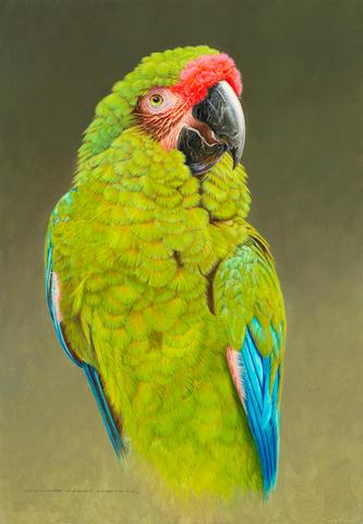 David Ord Kerr (British, born 1952) Military Macaw (Painted in 2018)