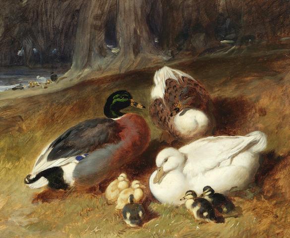 John Frederick Herring, Snr. (British, 1795-1865) Ducks and ducklings