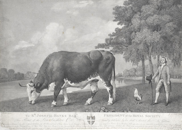 After George Stubbs, (British, 1724-1806) The Lincolnshire Ox, 1791 published 1791 (please note that this work has been cut down)